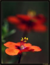 Candela Flor002