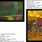 Iniciación a la fotografía macro por P. Candela. Parte I.