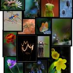 Iniciación a la fotografía macro por P. Candela