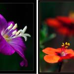 Iniciación a la fotografía macro. Parte III.
