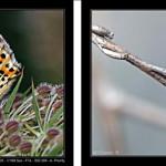 Iniciación a la fotografía macro. Parte V.