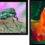 Iniciación a la fotografía macro. Parte VI.