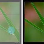 Iniciación a la fotografía macro. Parte IV.