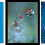 Ganadores 44 Concurso Mensual Fotocentro