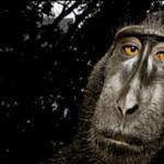 Nilo Merino, sus 3 días en Londres en los Wildlife Photographer of the Year 2008
