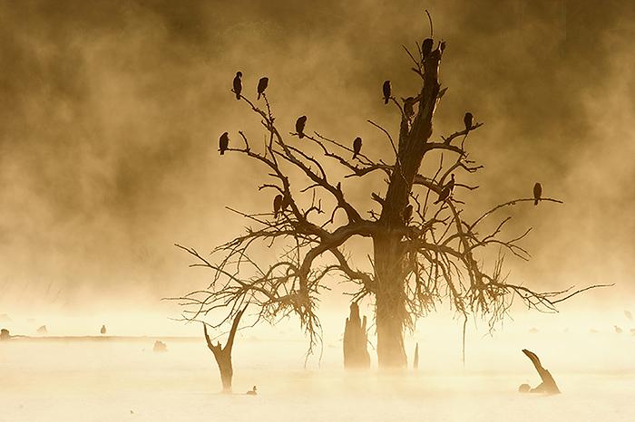 luis_dormidero-de-cormoran-grande-3