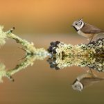 Fotografía de aves con reflejo (por José Benito Ruíz)