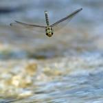 Técnica fotográfica: Insectos en vuelo