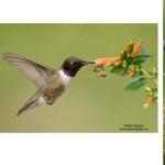 [Fotógrafos] Alan Murphy – Fotografía de aves