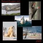 NatureScapes.net, las imágenes del 2009.