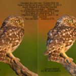 [Técnica Fotográfica] Flash a distancia en foto de naturaleza