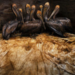Daniel Beltrá gana el Wildlife Photographer of the Year 2011