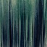 [Técnica fotográfica] Barrido «En otoño»