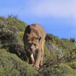 Looking for the Wild por Andoni Canela y el libro: «Durmiendo con lobos».