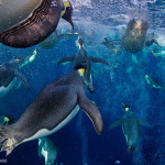 Fallado el premio Wildlife Photographer of the Year 2012
